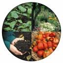 4 Steps of Gardening