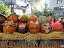 Pumpkin Bash Pumpkins
